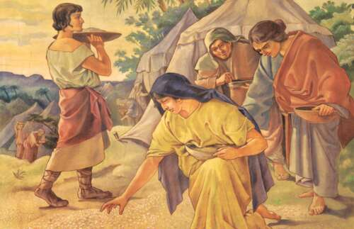 gathering manna in the wilderness