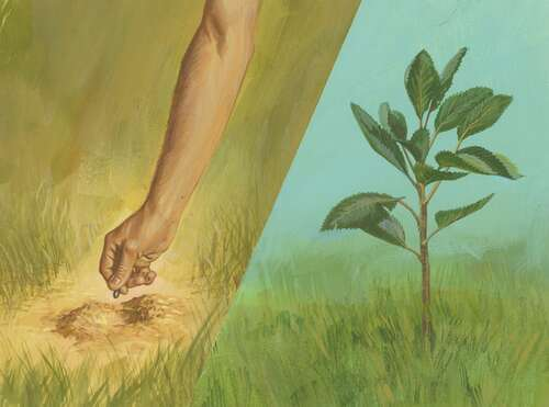 hand planting seed