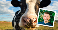 young man and cow